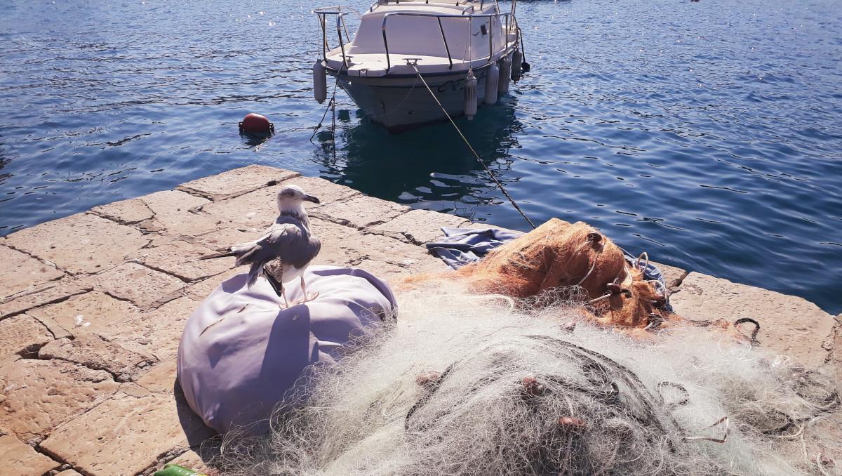 Vene ja kalaverkko ja lokki rannalla